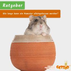 Bild - Hamster alleine lassen