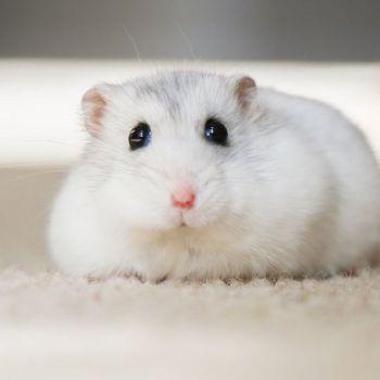 Hamster Winterruhe - Bild