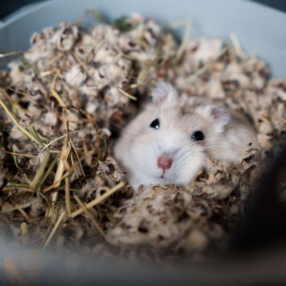 Hamster-Haltung-im-Winter