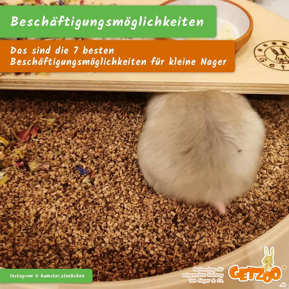 Getzoo-Ratgeber-besten-Besch-ftigungsm-glichkeiten-kleine-Nager-Tier-Kleintier-2021-06 - Bild