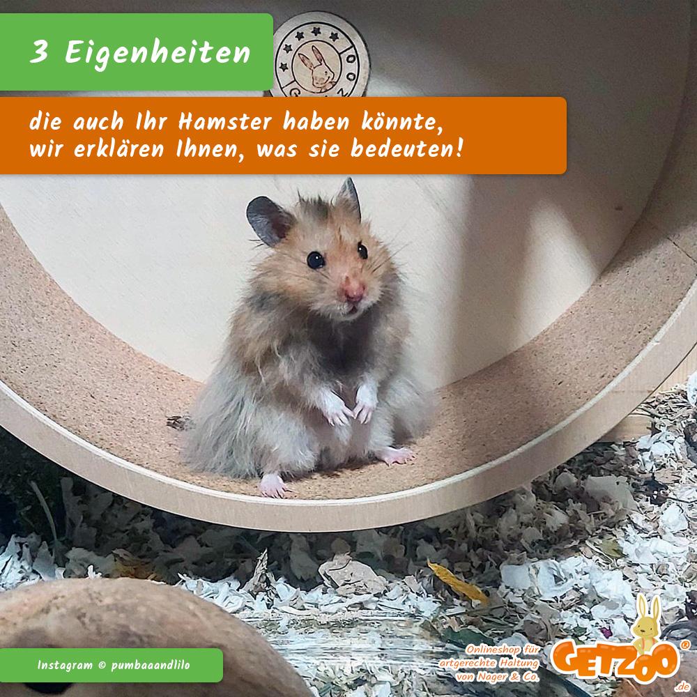 Getzoo-Eigenheiten-Hamster-Ratgeber-Info-07-2021 - Bild