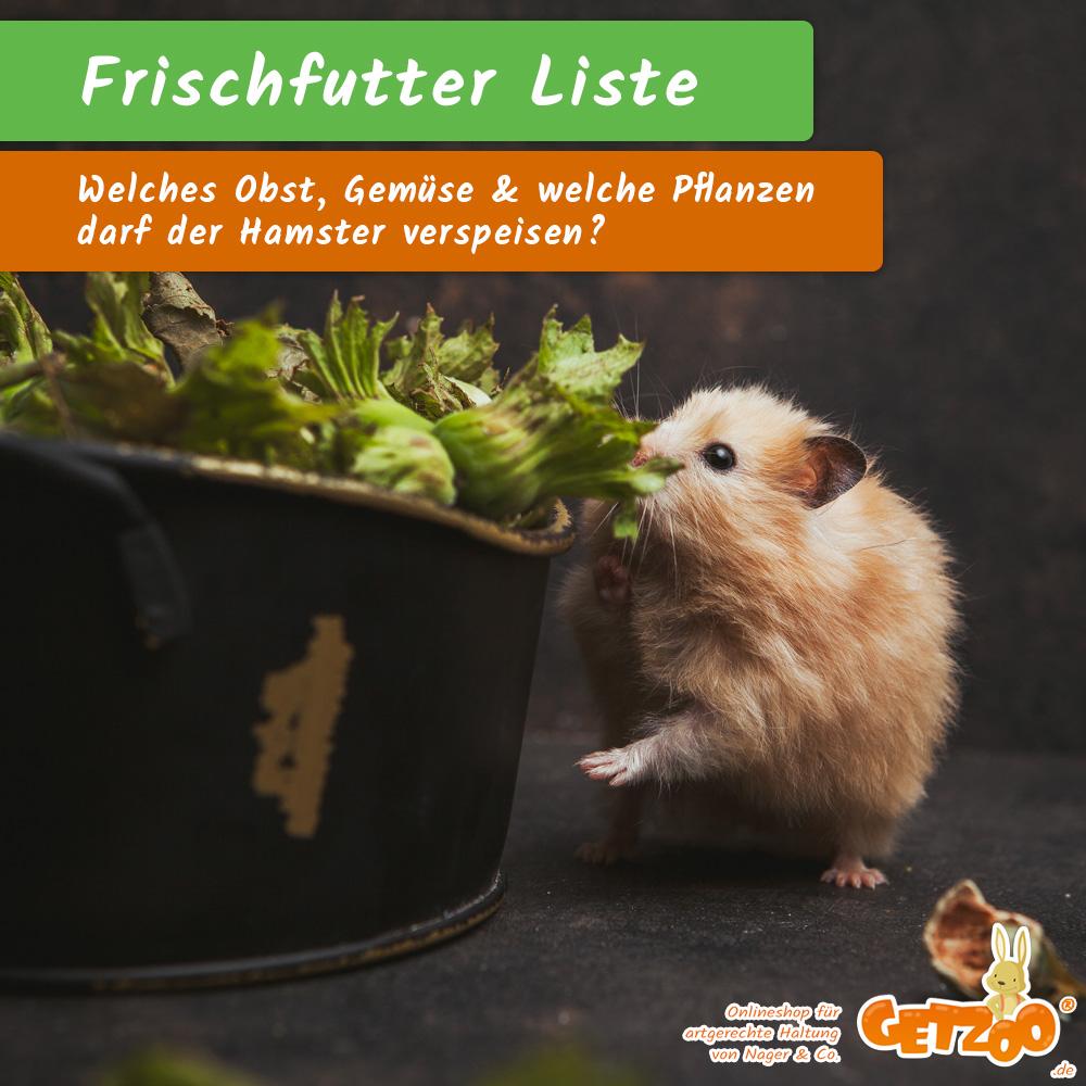 Getzoo-Ratgeber-Frischfutter-Liste-Hamster-Nager-Kleintier-Tier-2021 - Bild