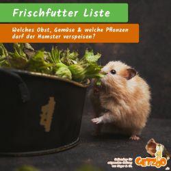 Bild - Frischfutterliste für Hamster